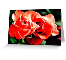 Apricots Roses Greeting Card