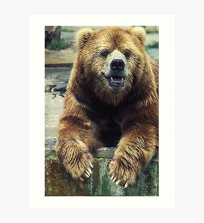 Big Kodiak Bear Art Print