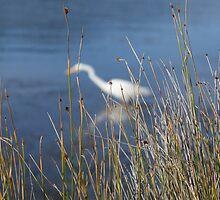 Egret 2 by Rochelle Buckley