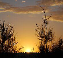 sunset and scrub by Hannah Saldaris