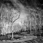 Burnt trees  by James Deypalan