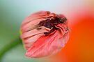 New Life by Renee Hubbard Fine Art Photography