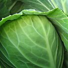 Cabbage by sarab4