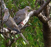Mourning dove lovers by ♥⊱ B. Randi Bailey