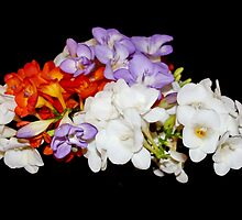 Freesia Bouquet by AnnDixon