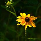 BRIGHT YELLOW FLOWER by Diane Peresie