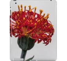 Red Macro Flower iPad Case/Skin