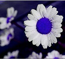 Dazee Blu by Chet  King