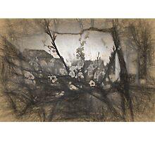 Cherry blossom impression Photographic Print