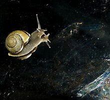 First Snail in Space by Jason Lee Jodoin