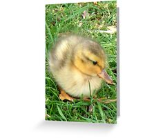 Little Duckling  Greeting Card