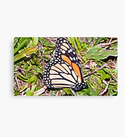 Butterfly sick  Canvas Print