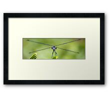 Red 5 Standing By Framed Print