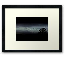 Cockatoos in Flight Framed Print