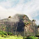 Lord Howe Island Series 1 by Amanda Cole