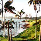 Lord Howe Island Series 2 by Amanda Cole