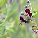 Cranesbill Munich by Astrid Ewing Photography