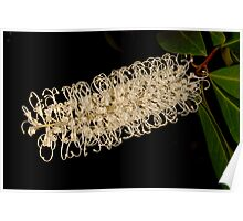 Ivory Curl Flower Poster