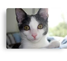 Our Little Man (P is for Pet) Canvas Print
