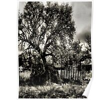 In The Shade Of A Tree   2   ( BoneYard Series ) Poster
