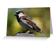 A Handsome Sparrow Greeting Card