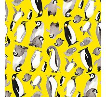 Yellow Penguin Potpourri Photographic Print