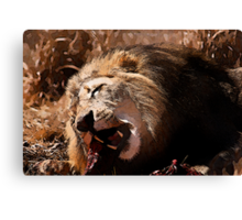 Male Lion Devouring Meal Canvas Print