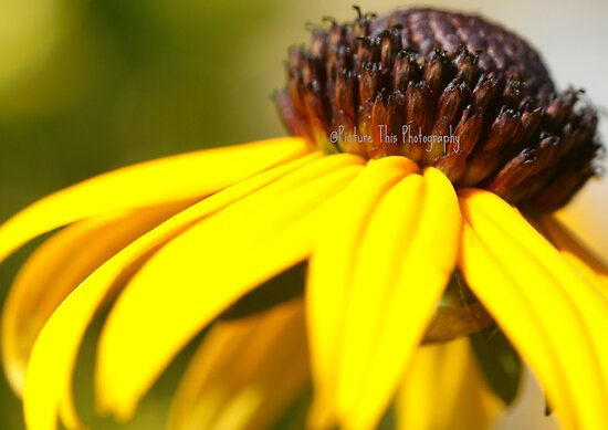 Soak Up the Sun by Rebecca Herren