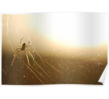 Spider in the evening glow Poster