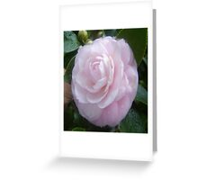 Pale & Pink Greeting Card