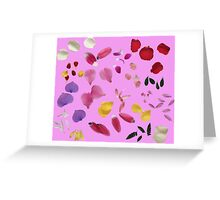 Colorful flower petals Greeting Card