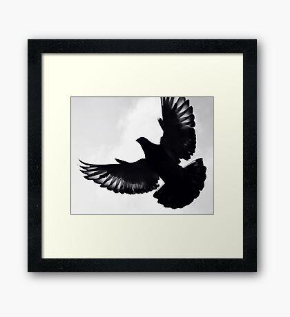 Pigeon silhouette ... Framed Print