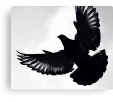 Pigeon silhouette ... Canvas Print