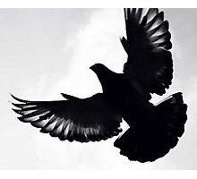 Pigeon silhouette ... Photographic Print