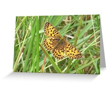 Pearl Bordered Fritillary Greeting Card