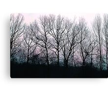 Winter morning trees Canvas Print