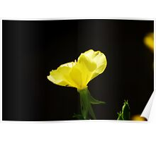 Yellow Wild Flower Poster