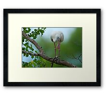 Lady with the Lovely Legs Framed Print