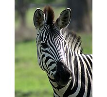 Zebra in Okavango Delta Photographic Print