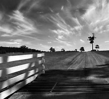Road to the Vineyard by Eve Parry