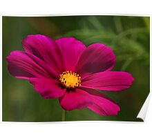COSMOS - NATURAL BACKGROUND Poster