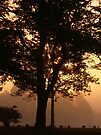 Magic Morning by Veronica Schultz