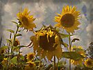 Sun And Sky by Shelly Harris