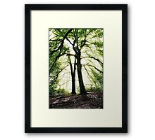 God's Rays, Sunlight streaming through trees Framed Print