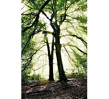God's Rays, Sunlight streaming through trees Photographic Print