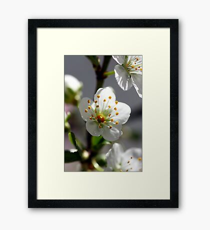 Speaking Out Framed Print
