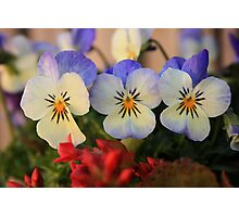 Three Little Sisters Photographic Print