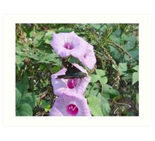 Long-tailed Blue Skipper in Wild Morning Glory Art Print