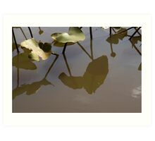 Pad Reflections Art Print
