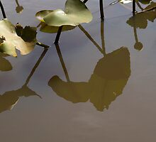 Pad Reflections by Donna Adamski